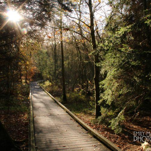 Bolam Park, Northumberland