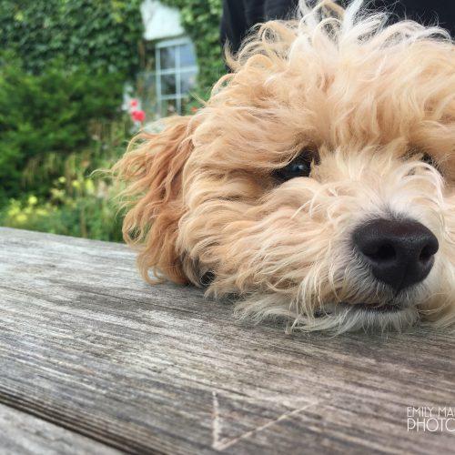 Puppy Gary, Glenelg Inn, Kirkton, Kyle